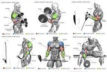 Musculació i exercicis