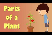 plants primary school