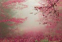 Un automne rose...