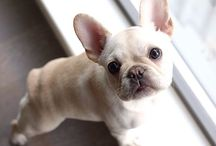 Dog Pups - The Cutest Pups Ever