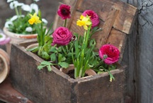 Garden / flower / Deko