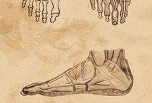 C05 MEMBRE/Maini si Picioare