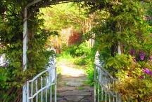Pathways / by Cathy Hazel