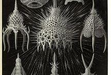 parametric nature