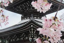 Japan / Japanese Art, Architecture, Costume, Cherry Blossom