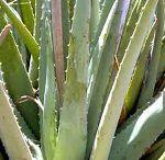 plantas e ervas medecinais