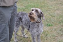 Mediterranean Cup / Tests of hunting practice on natural game (WITHOUT KILLING ) Pointing Breeds Continental and British categories Individual and Teams - 22 and 23 October 2014 - Pieve Santo Stefano (AR)