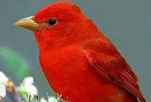 szép madár