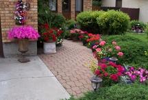 lily jardín / opciones e ideas