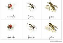 Les insectes & cie