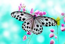ANIMAL • Butterfly