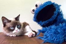 I  luv grumpy cat! / Grumpy cat, that is all