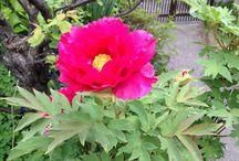 Flower & Blossom / 花や自然です。