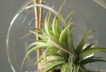 & Succulents & airplants / by Jenny Chicago