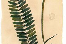 ANIMA PLANTS