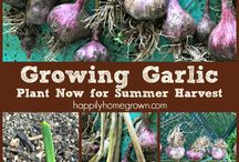 In the Garden / Whether you are a homesteader or just have a backyard garden, we can't wait to see the flowers, vegetables, fruits, and herbs you have growing!