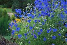 North Carolina Gardening