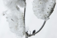 Photography - plants