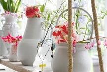 Planten Voor Het Raam
