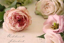 Roses... Love ❤️ Romantic