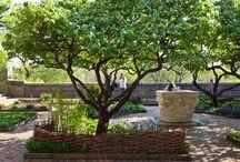 Garten - Obstbäume