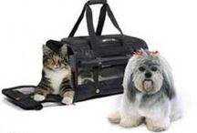 Dog Crates & Kennels