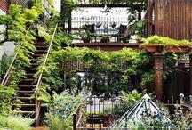 garden: roof