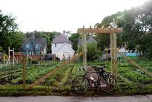 Urban Farms / by agrowculture
