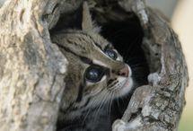Kitties / Kittens