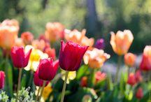 Magnifique printemps