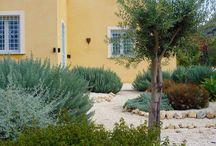 mediterannean garden / kertek, kertrendezés