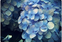 flowers / by Carla Montes de Oca Jaña