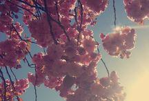 bloemen enzo