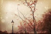 Photography I like like. / by Erin Powers