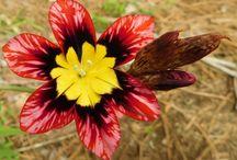 Gardens, Plants, & Flowers at Love Your Pet Expo Sanctuary.