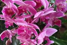 I giardini d'Ischia / foto dei giardini della nostra isola