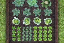 vegetable gardening plan