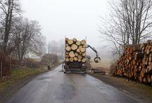logs timber
