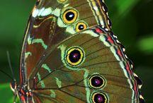 Maravillas naturaleza y vida