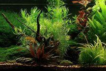 My freshwater aquarium / Aqua Portfolio
