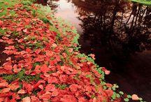 Autumn / by Irene Marchioro