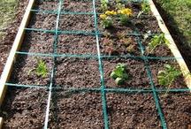 DIY Garden Plants/Beds