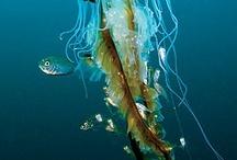 Ocean Art Projects / by Tabitha Burmester Seaton