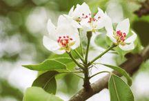 Bloemenliefde / De mooiste bloemen...