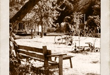 Old Forest School....grounds