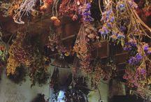 Сухоцветы