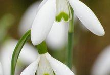 Seizoenen: lente / De natuur komt weer tot leven!