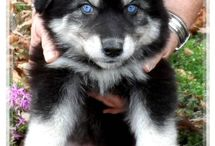 my future puppy