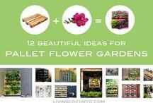 a 1 gardening / by denise farrow
