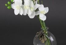 Orchids - Permanent Botanicals